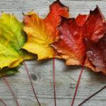 Gestión del cambio: 3 fallos comunes y 3 soluciones efectivas